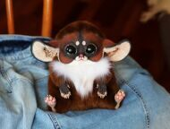 Inari Fox: Ginger
