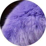 Purple-blue polar fox