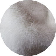 White medium fluffy