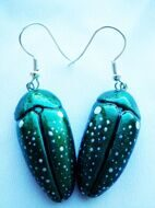 Сhafer earrings