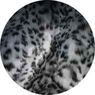 New snow leopard