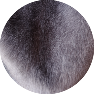 Dark gray medium mink